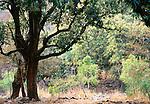 Landscape, Ranthambore National Park, India