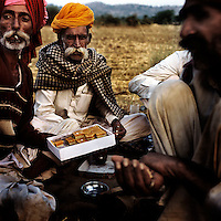 Raika men share a box of sweets to celebrate the Hindu holiday of Diwali. The Raika are an ancestral caste of camel breeders in Rajasthan. Due to the increased cost of feeding and shelter, more and more Raika are being forced to sell off their camels, often for camel meat, which was once considered taboo.