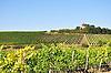 Weinbergsturm von Albig, Turm auf dem Fels in der Weinlage Hundskopf