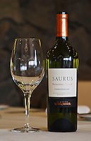 Bottle and glass of Saurus Patagonia Select Chardonnay Bodega Familia Schroeder Winery, also called Saurus, Neuquen, Patagonia, Argentina, South America