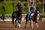 OCT 25: Elate with assistant trainer Riley Mott on track at Santa Anita Park in Arcadia, California on Oct 25, 2019. Evers/Eclipse Sportswire/Breeders' Cup