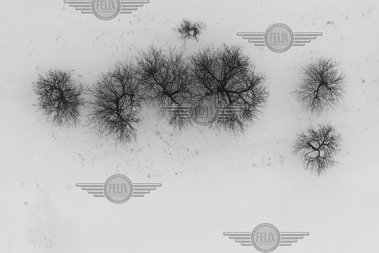 An aerial view of trees surrounded by snow on the floodplains of the Vistula River in Grudziadz.