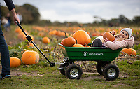 BNPS.co.uk (01202) 558833. <br /> Pic: CorinMesser/BNPS<br /> <br /> Pictured: Verity Roberts, 4, with her pick of pumpkins. <br /> <br /> P p p pick up a pumpkin...<br /> <br /> Families flock to Sopley Farm near Christchurch, Dorset to pick out a pumpkin in time for halloween.
