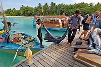 Sailfish (Istiophorus platypterus) Vakarufalhi , Ari Atoll, Maldives, Indian Ocean