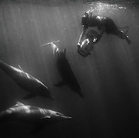 We were fortunate to swim with wild bottlenose dolphins during our stay in Western Australia.  Please note: all dolphin images have been cleaned up a bit due to the amount of detritus in the water, so they are not always accurate representations of the true scene.