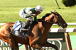 July 05, 2014: Zivo (NY) with Jose Lezcano win the 128th running of the Grade II Suburban Stakes for 3-year olds & up, going 1 1/4 mile at Belmont Park. Trainer: Chad Brown . Owner:Thomas Coleman . Sue Kawczynski/ESW/CSM