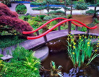 Bridge, pond and water lilies.  Park and Tilford Garden. Vancouver, BC