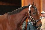 17 January 2010.   Kentucky Stallion Farms.  Kodiak Kowboy at the Vinery in Lexington, KY.