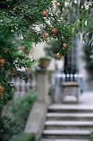 """Europe/France/Provence-Alpes-Côte- d'Azur/84/Vaucluse/Avignon: jardin de l'Hotel particulier - Hotel-Restaurant """"La Mirande"""""""