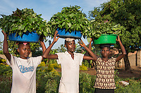 AWright_UG_001803.tif<br /> Girls carrying vegetable on their heads, Uganda, Africa.