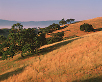 Landscape of the Rolling Hills at sunrise with trees casting long shadows. Santa Ynez Valley, California.