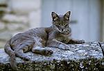 Domestic cat, Provence, France
