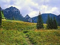 The view from Polana Pisana in Dolina Koscieliska (Koscieliska Valley) on Saturn and Ratusz on the right, Polish Tatra Mountais.