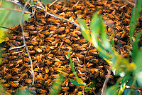 Swarm of bees.