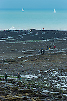 France, Pas-de-Calais (62), Côte d'Opale, Wimereux: Pêcheurs de moules sauvages à la Pointe aux Oies  //  France, Pas de Calais, Cote d'Opale (Opal Coast), Wimereux: Fishing of wild mussels, la Pointe aux Oies