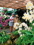 Great Britain, England, Channel Islands, Jersey, Victoria Village: couple admiring flowers at Eric Young Orchid Foundation | Grossbritannien, England, Kanalinseln, Jersey, Victoria Village: Orchideenschau in Eric Young Orchid Foundation