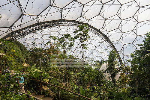 Eden project, Cornwall, England. Top view in rainforest biome.