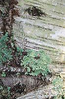 Driftwood Abstract, Sheep Island, Castine, Maine, US