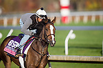 October 29, 2015:   Last Waltz (IRE), trained by Chad C. Brown and owned by Swift Thoroughbreds, Bradley Thoroughbreds, Head of Plains Partners LLC, exercises in preparation for the Breeders' Cup Juvenile Fillies Turf at Keeneland Race Track in Lexington, Kentucky. Alex Evers/ESW/CSM