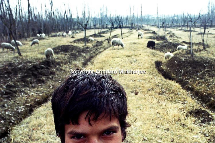 A Sheaphard boy near Srinagar, Jammu and Kashmir, India, Arindam Mukherjee