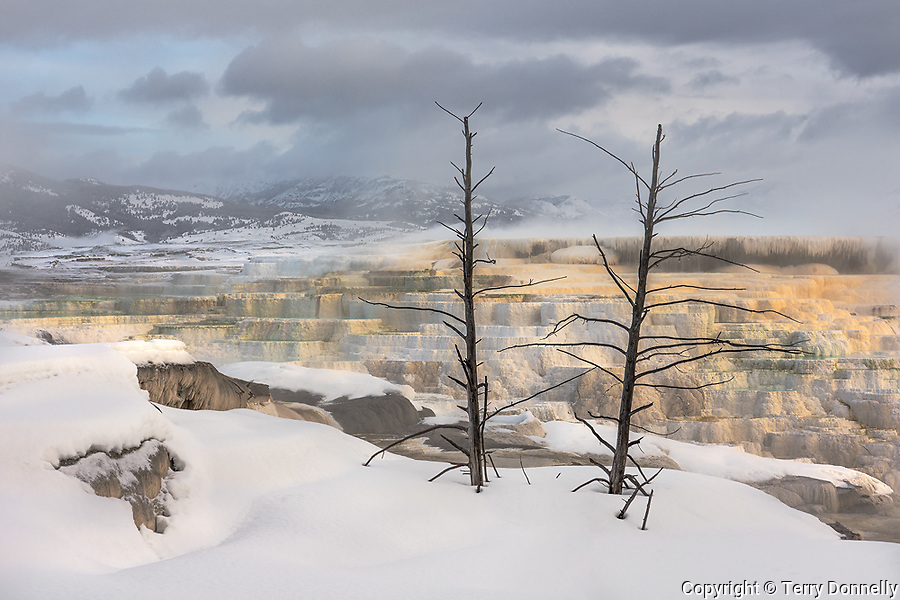Yellowstone National Park, Woming:<br /> Mammoth Hot Springs, Upper Terraces - Canary Springs in winter