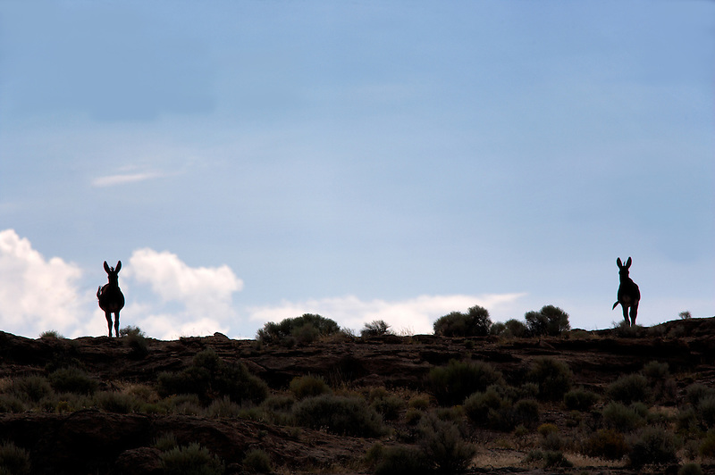 Wild burros. Near Dinio