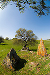 Colorful lichen covered tombstone rocks, budding oak, spring. Sierra Neavada Foothills in central California.
