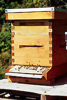 Terra Nova Rural Park, Richmond, BC, British Columbia, Canada - Bees at Entrance to Wooden Beehive Box