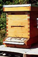 Terra Nova Rural Park, Richmond, BC, British Columbia, Canada - Bees at Entrance to Wooden Beehive Box