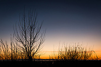 Bare limbs rise to a darkening sky while the setting sun paints the horizon with shades of gold and orange.