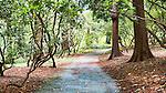 Rhododendron Forsest Trail.   Washington Park Arboretum, Seattle, Washington, USA.  Cedar trees adorned withmoss over aging foot bridge.