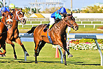 20 February 2010: D'Funnybone with Edger Prado wins the The Canadian Turf Stakes Grade 3 at Gulfstream Park in Hallandale Beach, FL