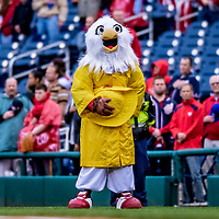 15 April 2018: Washington Nationals Mascot Screech wears rain attire prior to the start of play against the Colorado Rockies at Nationals Park in Washington, DC. All MLB players wore Number 42 to commemorate the life of Jackie Robinson and to celebrate Black Heritage Day in pro baseball. The Rockies edged out the Nationals 6-5 to take the final game of their 4-game series. Mandatory Credit: Ed Wolfstein Photo *** RAW (NEF) Image File Available ***