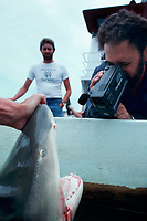 Dr. Samuel H. Gruber (U. Miami) uses video to document experiments on captive lemon sharks, Negaprion brevirostris