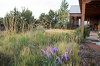 Xeriscape New Mexico meadow garden lawn substitute with Indian grass (Sorghastrum nutans) and Liatris; design by Judith Phillips