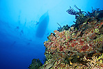Coral reef, Grand Cayman