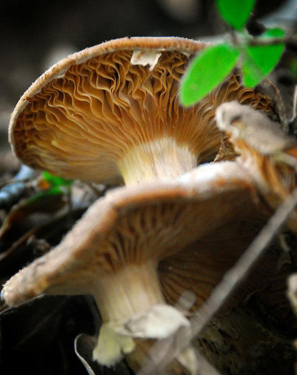 Wild mushrooms (Matt Davis Trail)