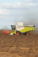 29-7-2021 Harvesting Linseed <br /> ©Tim Scrivener Photographer 07850 303986<br />      ....Covering Agriculture In The UK....