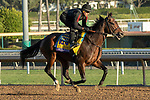 ARCADIA, CA  OCTOBER 25: Breeders' Cup Classic entrant McKinzie, trained by Bob Baffert, exercises in preparation for the Breeders' Cup World Championships at Santa Anita Park in Arcadia, California on October 25, 2019.  (Photo by Casey Phillips/Eclipse Sportswire/CSM)