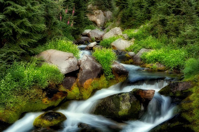 Paradise River with summer wildflowers. Mt. Rainier National Park, Washington