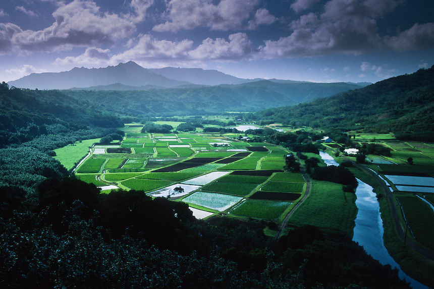 Taro Fields at Hanalei National Wildlife Refuge<br /> Kauai, Hawaii, US