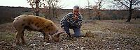 """Europe/France/Midi-Pyrénées/46/Lot/Lalbenque : Mr Raymond Boisset et son cochon """"Kiki"""" lors du cavage (recherche des truffes) [Autorisation : 255]"""