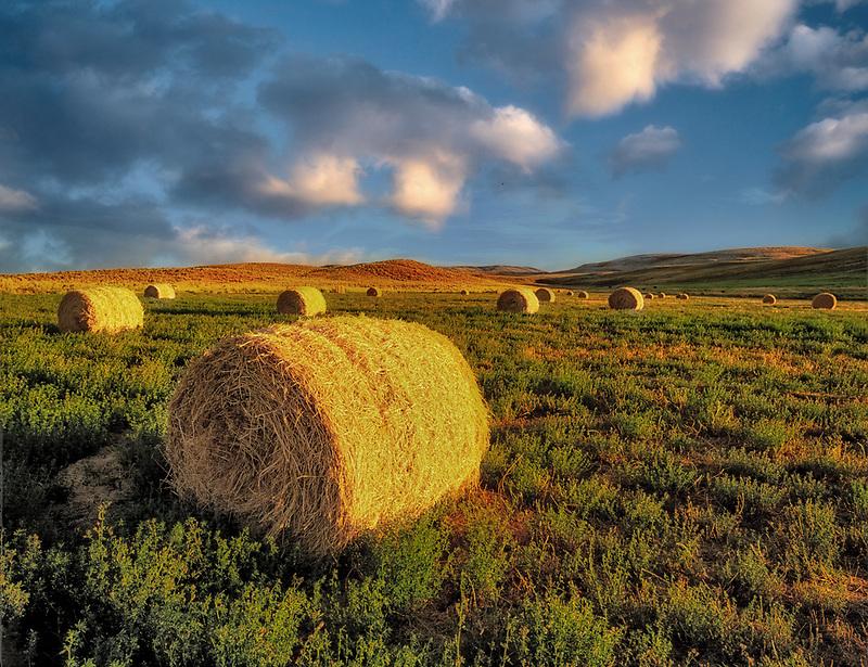 Alfalfa bales. Note second growth beneath bales. Malhuer County. Near Jorden Valley, Oregon