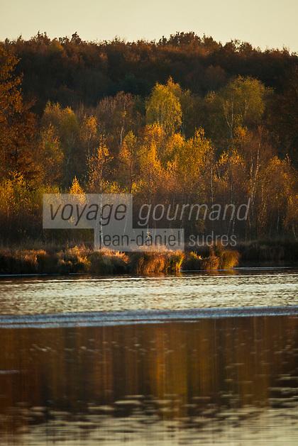 Europe/France/Centre/41/Loir-et-Cher/Sologne/Env de Saint-Viâtre: Etang en Sologne // Europe/France/Near Saint-Viâtre: Pond Sologne
