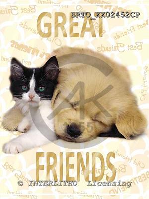 Alfredo, ANIMALS, dogs, photos+++++,BRTOXX02452CP,#a# Hunde, perros