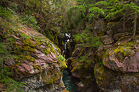 Avalanche Creek, Trail of the Cedars