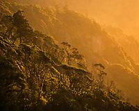 Native coastal rainforest at sunset, UNESCO World Heritage Area, South Westland, West Coast, New Zealand, NZ