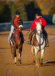 October 29, 2015:   Private Zone, trained by Jorge Navarro and owned by Good Friends Stable, exercises in preparation for the Breeders' Cup Sprint at Keeneland Race Track in Lexington, Kentucky. Alex Evers/ESW/CSM