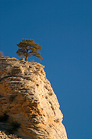 Tree on clifftop against blue sky, Zion National Park, Washington County, U