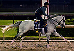 October 31, 2018 : Disco Partner, trained by Christophe Clement, gallops in preparation for the Breeders' Cup Turf Sprint at Churchill Downs on October 31, 2018 in Louisville, KY. Jessica Morgan/ESW/CSM